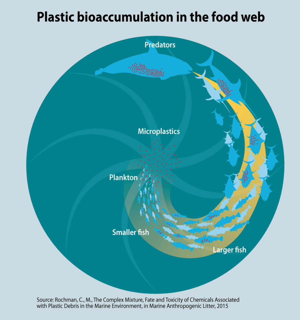 bioaccumulation in food web