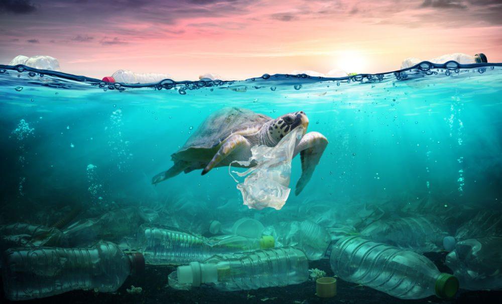 marine plastics from mega to microscopic effects on wildlife human health