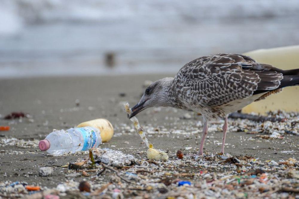 plastic bird image