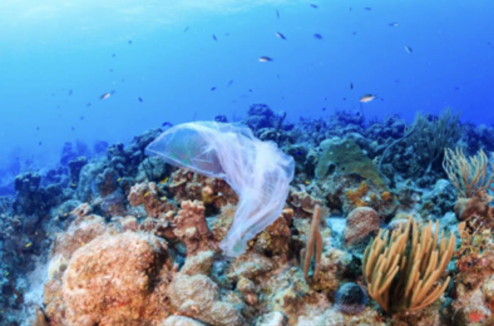 plastic smothering coral reef