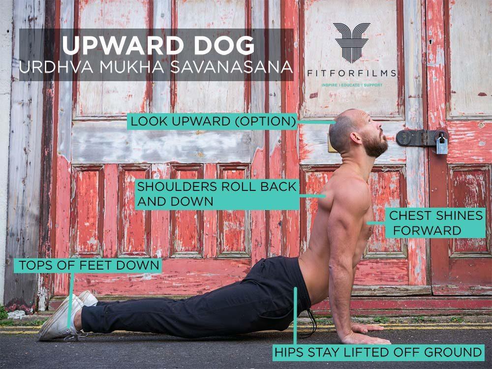 upward dog image