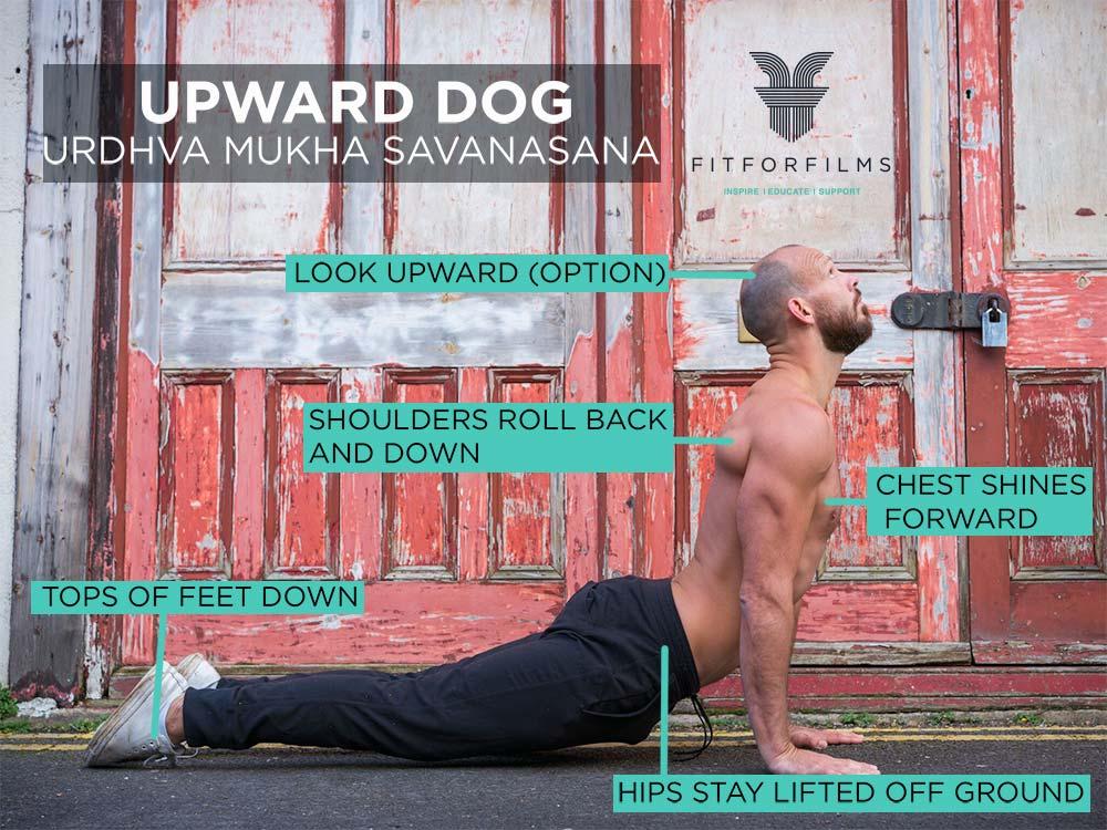 upward dog image